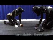 Three Rubber Girls  - Preview 1